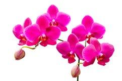 Vibrierende farbige lila Blumen von Orchideen Stockbilder