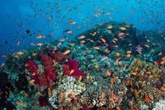 Vibrierende Fische und Coral Reef Stockbilder