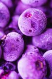 Vibrierende gefrorene Blaubeeren in modischer ultra Violet Color mit schöner Eisblume und Beschaffenheit Sommerlebensmittelhinter Stockbilder