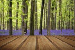 Vibrierende Glockenblumeteppich Frühlings-Waldlandschaft mit hölzernem Plan Lizenzfreies Stockfoto