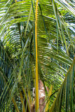 Vibrierende grüne Palmblätter Stockbild