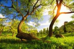 Vibrierende Landschaft des Sommers lizenzfreie stockfotos