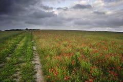 Vibrierende Mohnblumefelder unter schwermütigem drastischem Himmel Stockfoto