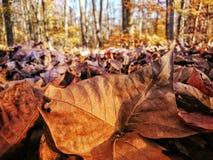 Vibrierende natürliche Beschaffenheit lizenzfreie stockfotografie
