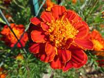 Vibrierende orange Blume Stockbild