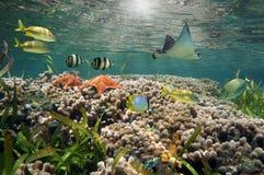 Vibrierende Seelebensdauer und Korallenriff Stockfoto