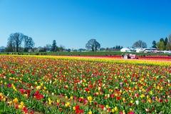 Vibrierende Tulip Farm Lizenzfreie Stockfotos