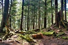 Vibrierende Wälder von Alaska stockbilder