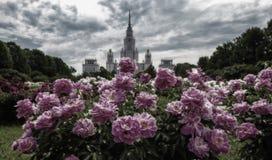 Vibrierende Weitwinkelansicht von Campus und von botanischem Garten berühmten R lizenzfreies stockfoto
