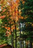 Vibrierender Autumn Color Lizenzfreie Stockbilder