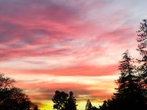 Vibrierender Baum-Schattenbild-Sonnenuntergang-Himmel Stockbilder