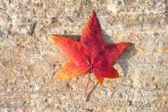 Vibrierender gelber und roter Herbst farbiges Blatt auf einem Steinhintergrund lizenzfreies stockbild