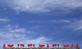 Vibrierender natur Hintergrund Stockfotos