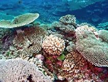 Vibrierender Pazifischer Ozean Coral Reef Lizenzfreie Stockfotografie