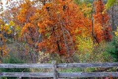 Vibrierender Rost farbiger Autumn Trees mit einem alten Zaun stockfotografie