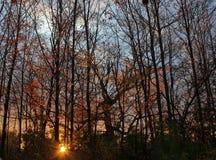 Vibrierender Sonnenuntergang zwar die Spätherbstbäume Lizenzfreie Stockfotos