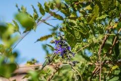 Vibrierender und bunter Homming-Vogel, der Nektar isst stockbild