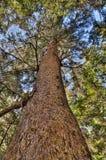 Vibrierendes Baum-Kabel, das oben schaut Lizenzfreie Stockfotografie