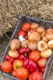 Vibrierendes Gemüse im Korb lizenzfreies stockfoto