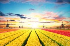 Vibrierendes Tulpenfeld mit niederländischen Windmühlen Stockfotos