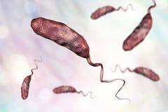 Vibrio βακτηρίδιο cholerae ελεύθερη απεικόνιση δικαιώματος