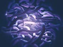 Vibrio Cholerae Bacteria Stock Photos