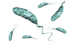 Vibrio cholerae bacterium. Isolated on white background, 3D illustration. Bacterium which causes cholera royalty free illustration