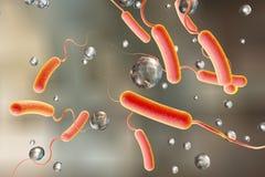 Vibrio cholerae Bakterie lizenzfreie abbildung