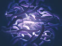 Vibrio de Bacteriën van Cholerae Stock Foto's