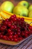 Viburnum μούρων Στοκ Εικόνες