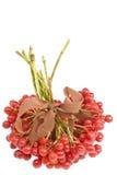 viburnum пука стоковое изображение