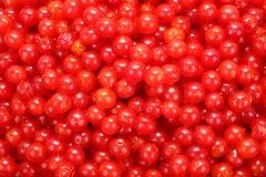 Viburnum background. Red viburnum background. Color Image Royalty Free Stock Images