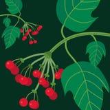 Viburnum background. Ukrainian design, red viburnum on a green background Royalty Free Stock Photos