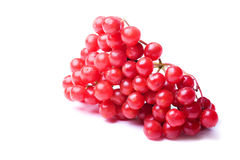 Viburnum berries Stock Photos
