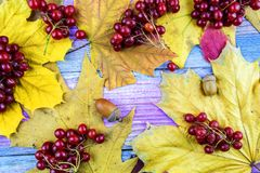 Autumn composition with yellow leaves, berries viburnum on a woo. Viburnum berries and autumn yellow leaves lie on a wooden background stock image