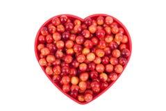 Viburnum berries in a bowl Stock Photo