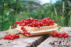 Viburnum berries in a bowl on a wooden table in the garden. Brush berries of viburnum  in birchbark  bowl on a wooden table in the garden Royalty Free Stock Photo