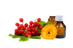 Viburnum berries and calendula essential oil. In small glass bottle, isolated on white background Royalty Free Stock Images