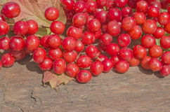 Viburnum berries  on wood Stock Photography