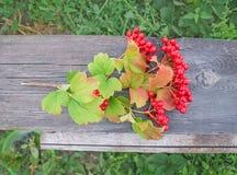 Viburnum berries  on wood Stock Image