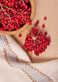 Viburnum berries Royalty Free Stock Image