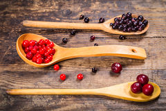 Viburnum, black currant and cherry in wooden spoons Stock Photography