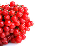 Viburnum Royalty Free Stock Images