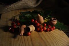 Viburnum com os jarros pequenos da argila fotografia de stock royalty free