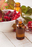 Viburnum. Concept homeopathy. Stock Photo