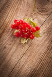 Viburnum czerwone jagody Zdjęcie Royalty Free