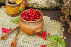 Viburnum czerwone jagody Fotografia Royalty Free