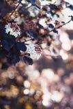 Viburnum en el jardín del verano Fotos de archivo libres de regalías
