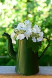 Viburnum flowers. In a green pot on a wooden board in the garden Stock Photo