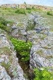 Viburnum grows in deep mountains Opuk crack. Stock Photos
